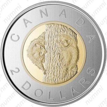 2 доллара 2015, детёныши енота